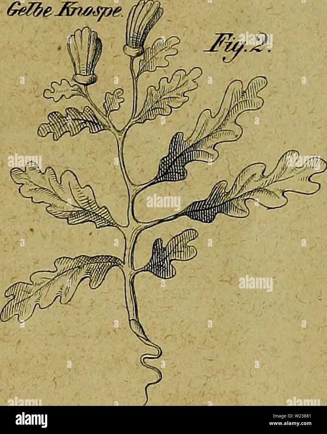 Archiv Bild ab Seite 142 der Kanarienvögel, Sprosser, Nachtigallen, Rothgimpel sterben, Stockbild