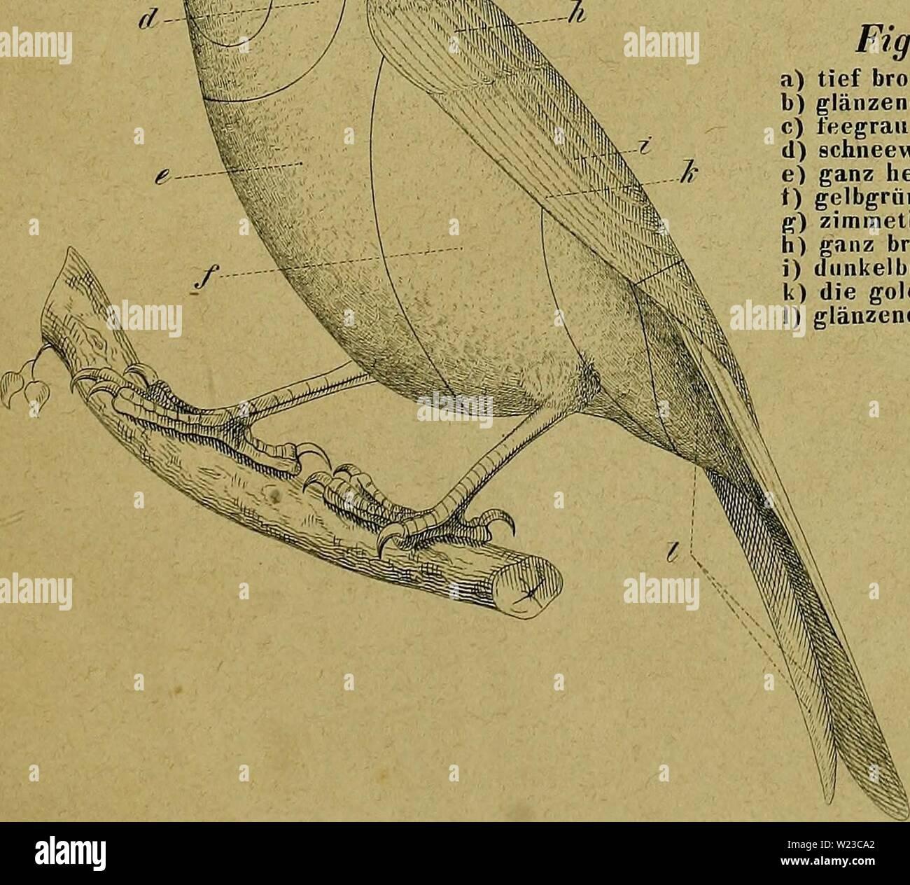 Archiv Bild ab Seite 152 der Kanarienvögel, Sprosser, Nachtigallen, Rothgimpel sterben, Stockbild