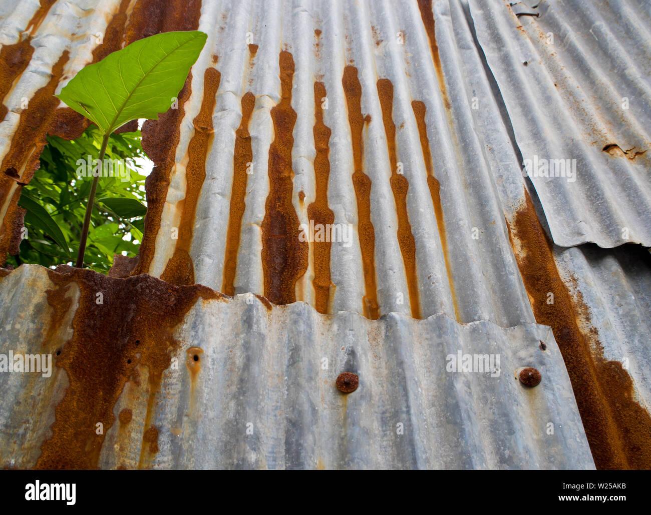 Super Eisenflecken Stockfotos & Eisenflecken Bilder - Alamy YO43