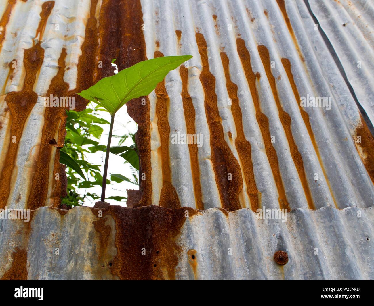 Super Eisenflecken Stockfotos & Eisenflecken Bilder - Alamy HV52