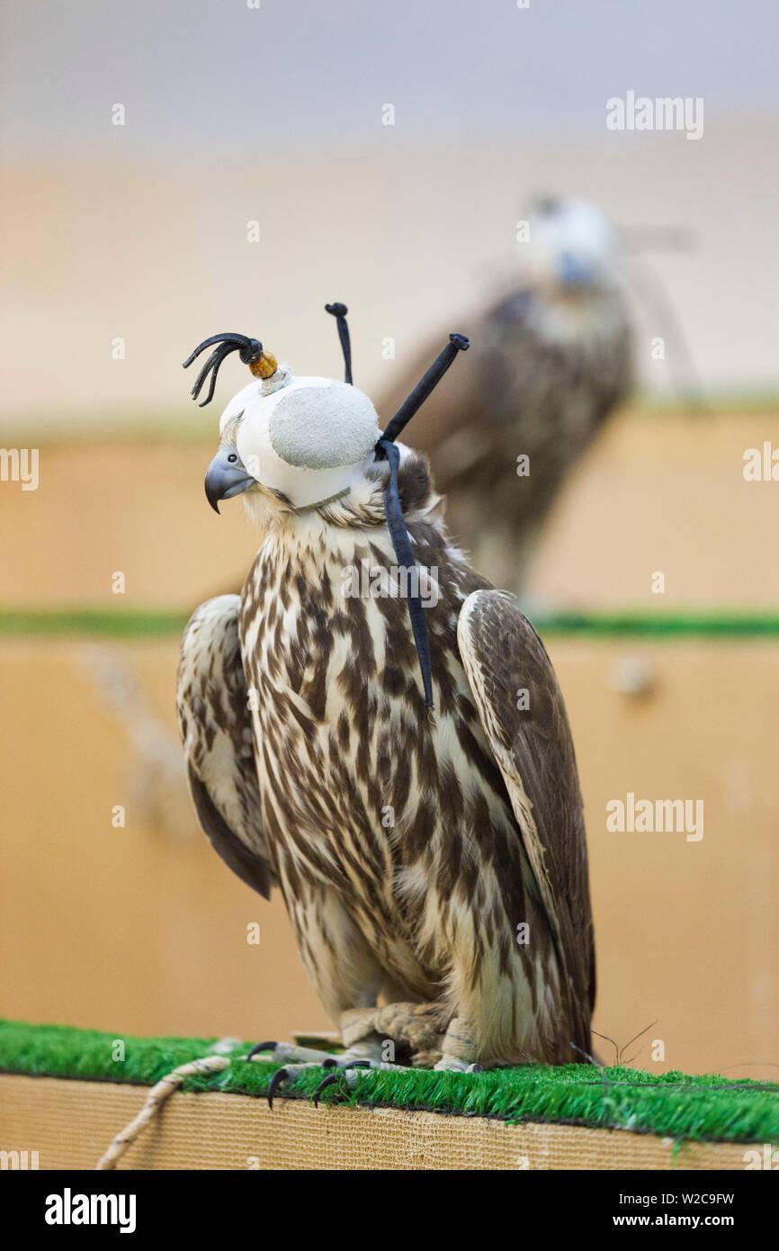 Katar, Doha, Falcon Souk Markt der Falcon Vögel zum Verkauf für die Falcon-Jagd Stockbild