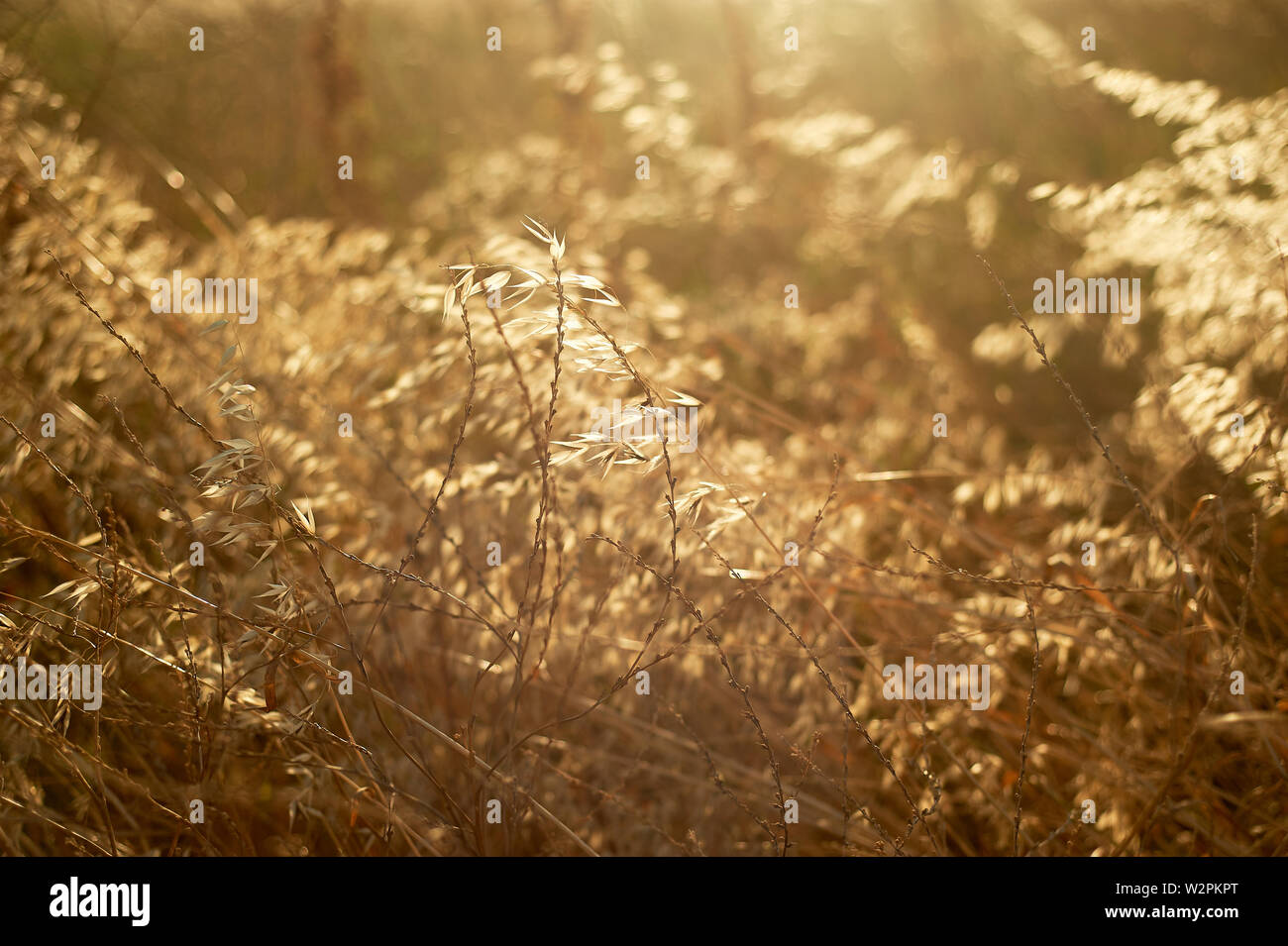 Die Textur der Gras, Kräutern. Eng. Bauernhof und Botanik. Stockfoto