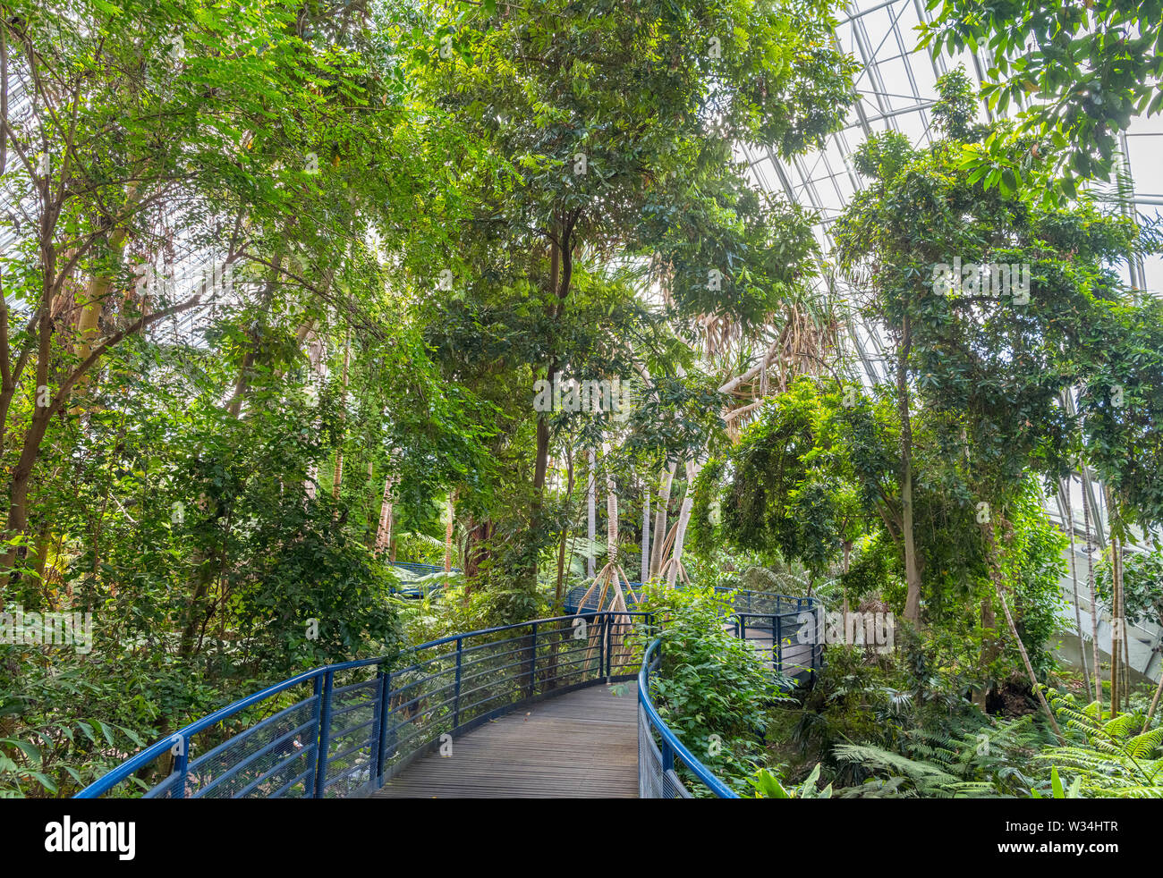 Innenraum der Bicentennial Conservatory, Adelaide Botanic Garden, Adelaide, South Australia, Australien Stockfoto