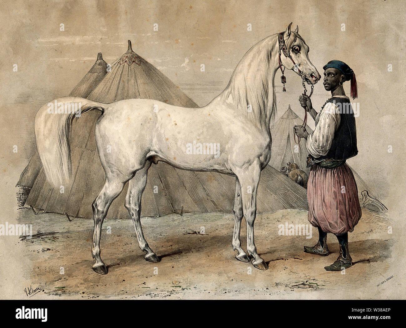 Ein Knecht in orientalischer Kleidung hält einen weißen arabischen Pferd durch die Zügel. Farbige Kreide Lithografie nach V. J. Adam. Stockbild