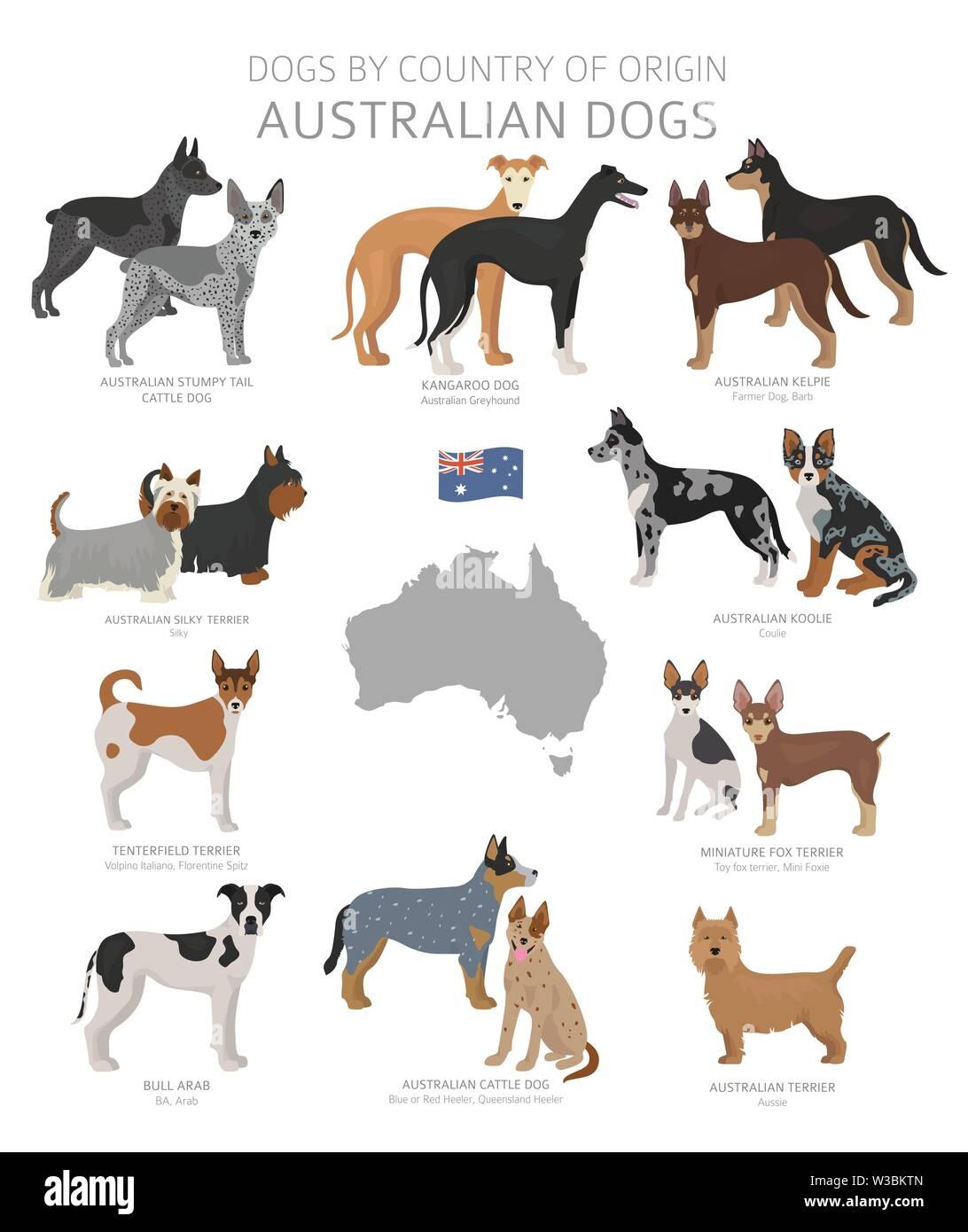 Hunde nach Herkunftsland. Australischen Hunderassen. Hirten, Jagd, Hüten, Spielzeug, Arbeiten und Service Hunde eingestellt. Vector Illustration Stockbild