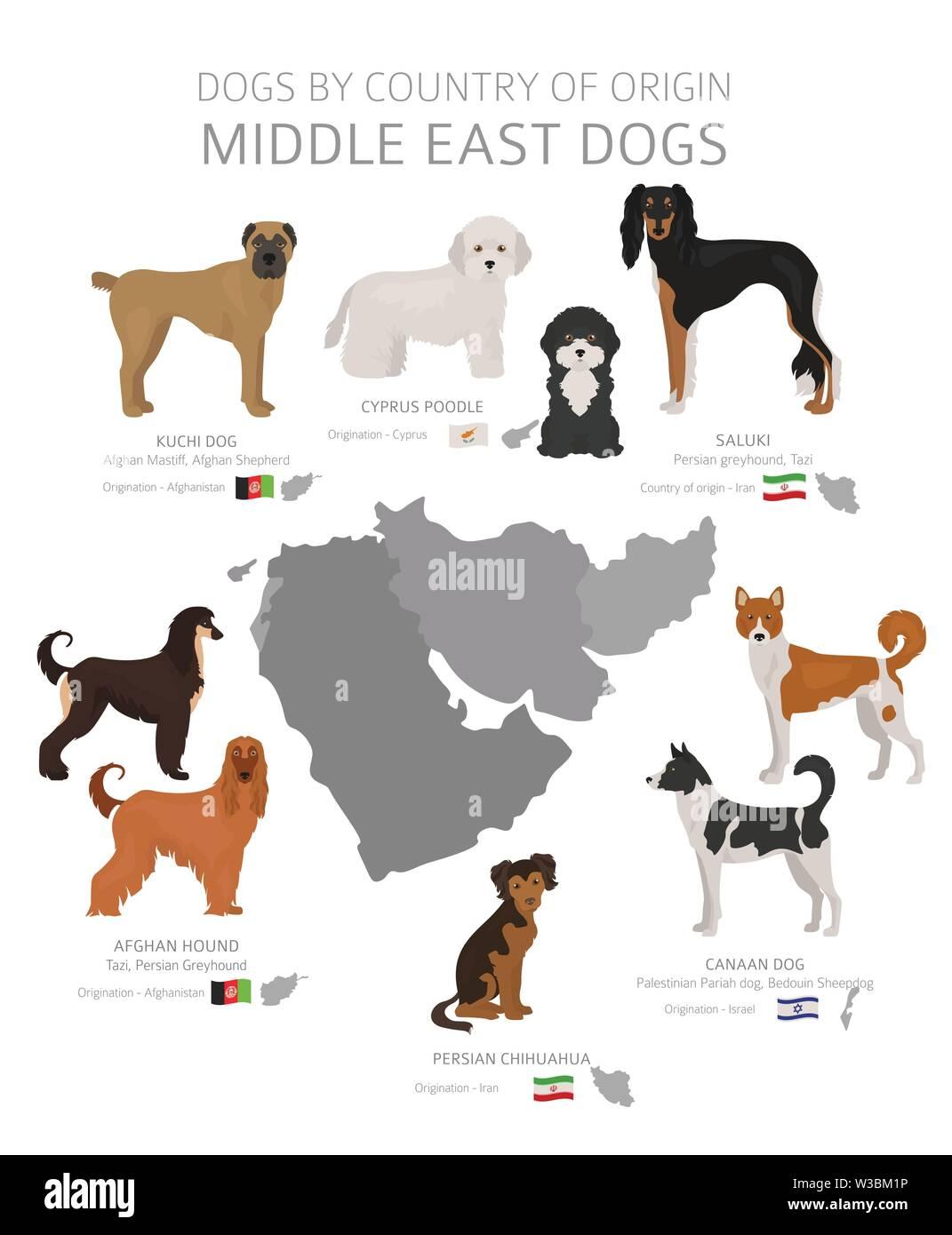 Hunde nach Herkunftsland. Naher Osten Hunderassen. Hirten, Jagd, Hüten, Spielzeug, Arbeiten und Service Hunde eingestellt. Vector Illustration Stockbild