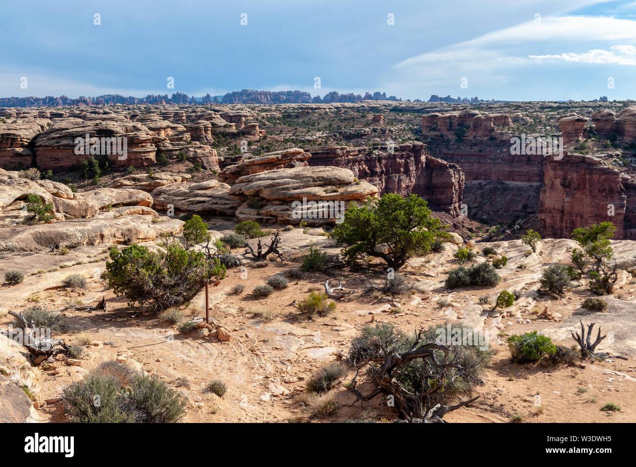 Landschaft entlang der Lost Canyon Loop Trail. Die Nadeln, Canyonlands National Park, Utah. Stockbild