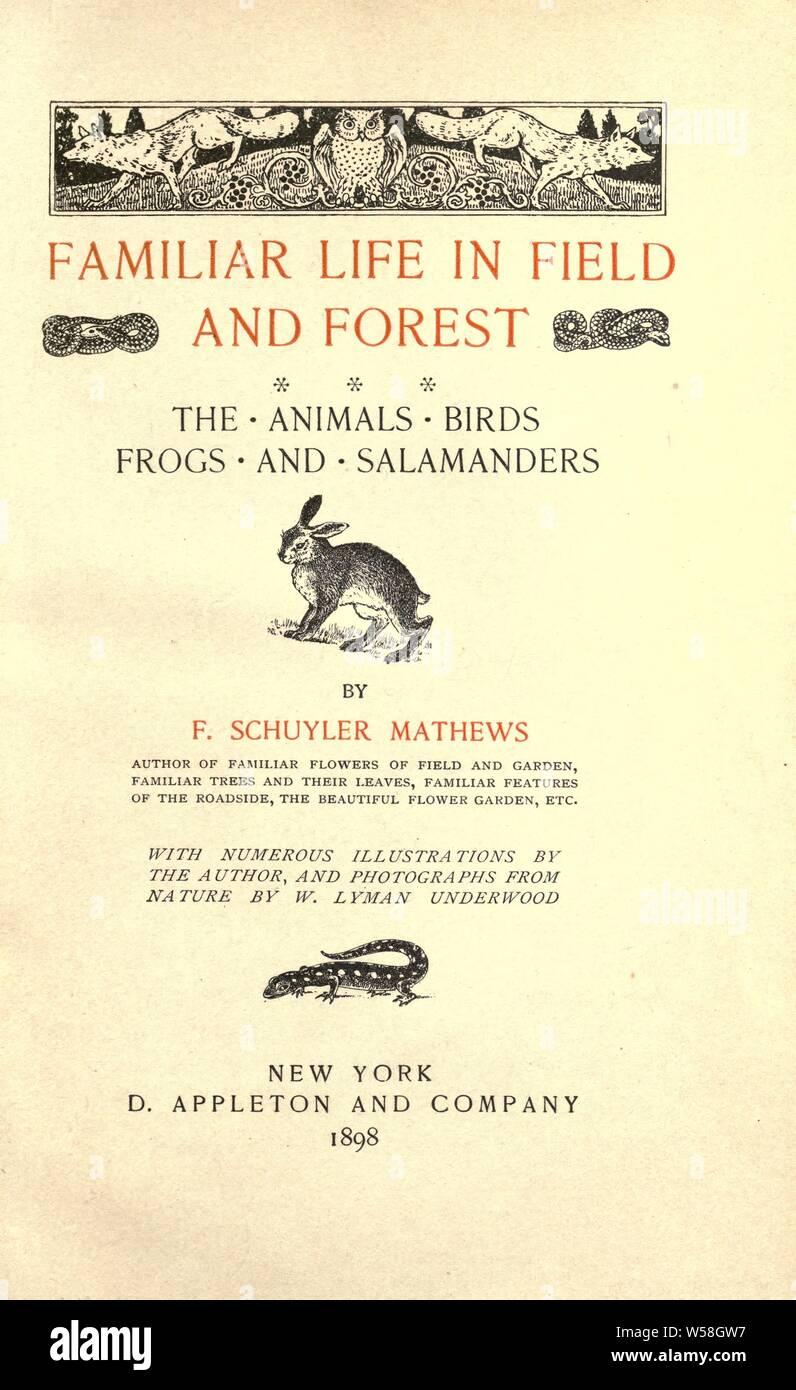 Vertraut leben in Feld und Wald; die Tiere, Vögel, Frösche und Salamander: Mathews, F. Schuyler (Ferdinand Schuyler), 1854-1938 Stockfoto