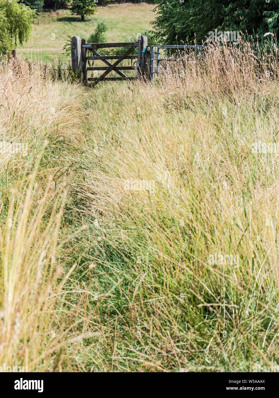 Eine grasbedeckte führender Pfad zu einem hölzernen Tor im Sommer in den Cotswolds. Stockfoto