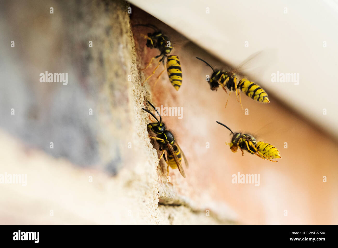 Wasp Nest Under Roof Stockfotos Wasp Nest Under Roof Bilder Alamy