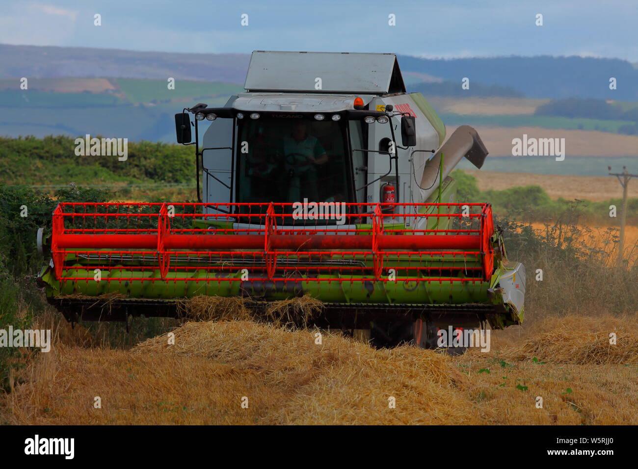 Ein Mähdrescher Wenden am Ende einer Reihe von Weizen in einem lokalen Bereich in der landschaftlich reizvollen Gegend von Southerndown in der Nähe von Bridgend in South Wales. Stockfoto