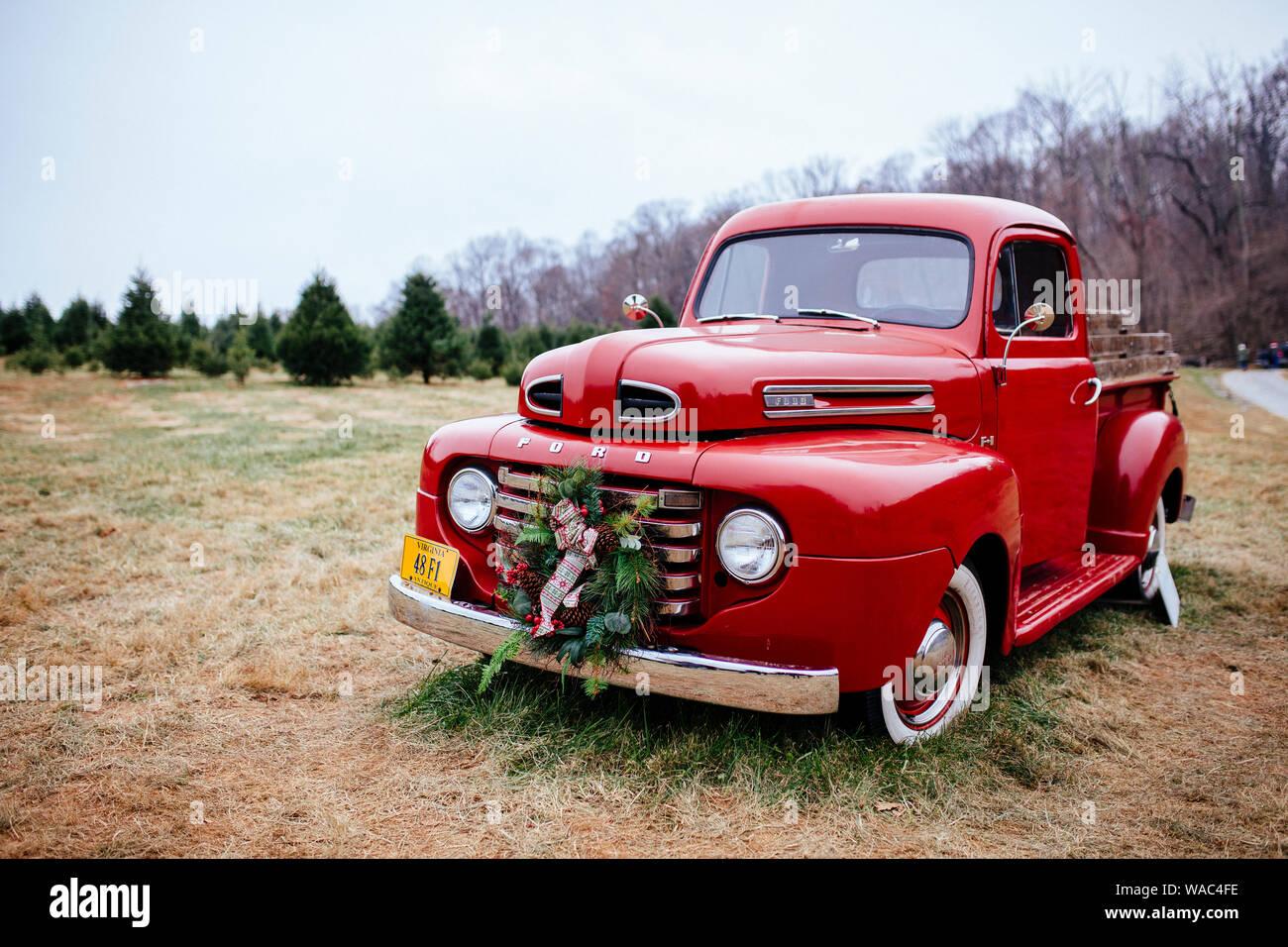 Szenen aus dem Kichern Lücke Christmas Tree Farm in der Nähe von Washington, DC. Stockfoto
