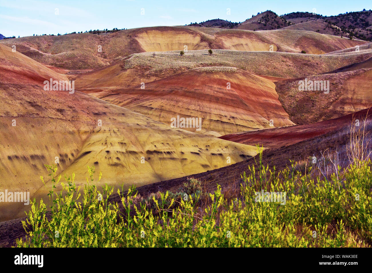 Gelbe blumen in Painted Hills, John Day Fossil Beds National Monument, Mitchell, Oregon, USA. Stockfoto