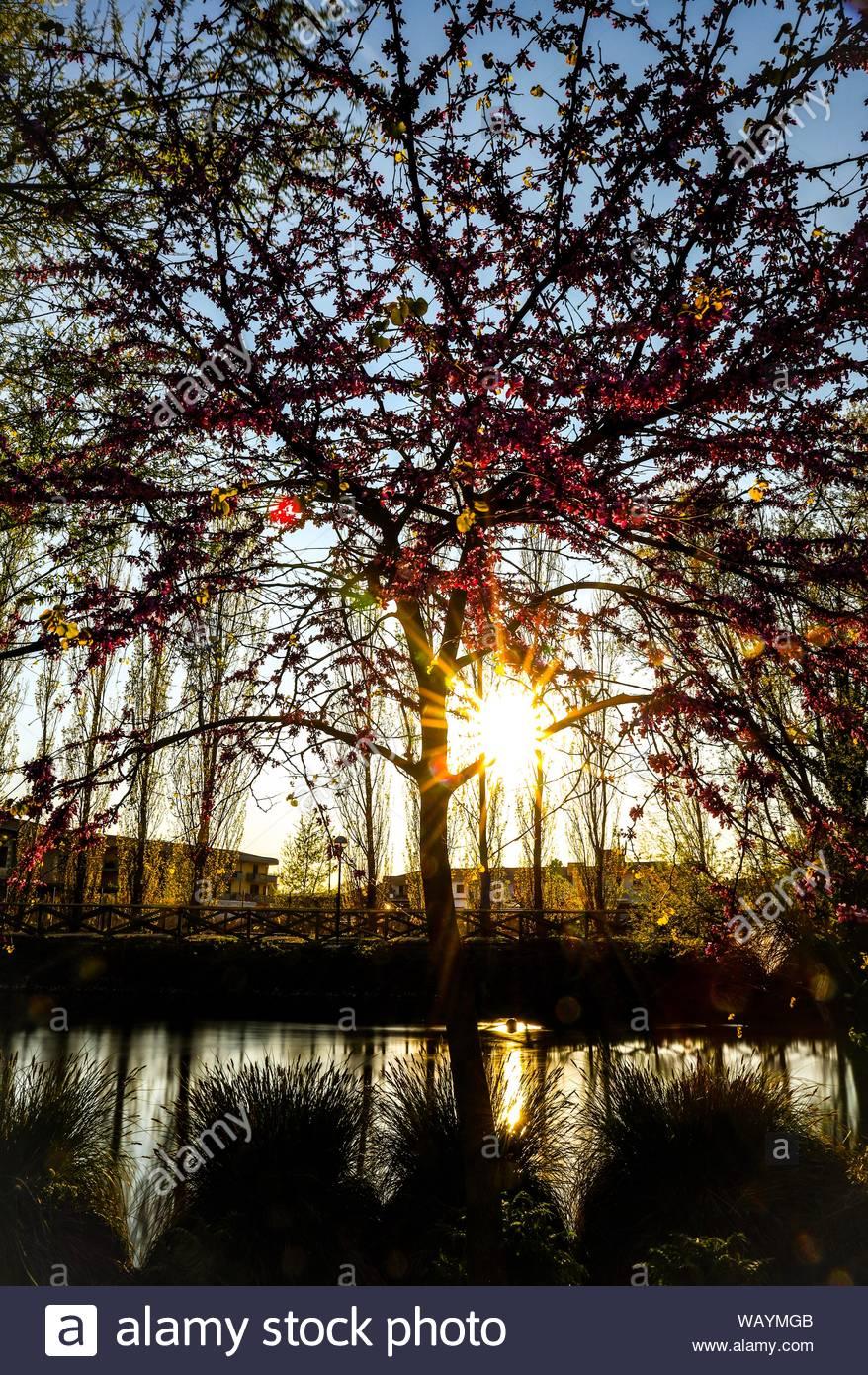 Bäume am See Stockfoto