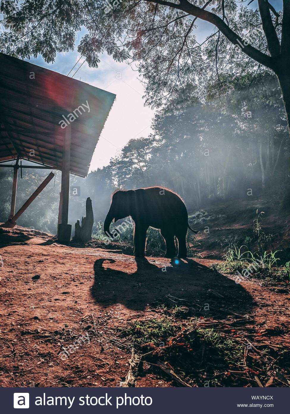Elefanten in der Nähe von Tree Stockfoto