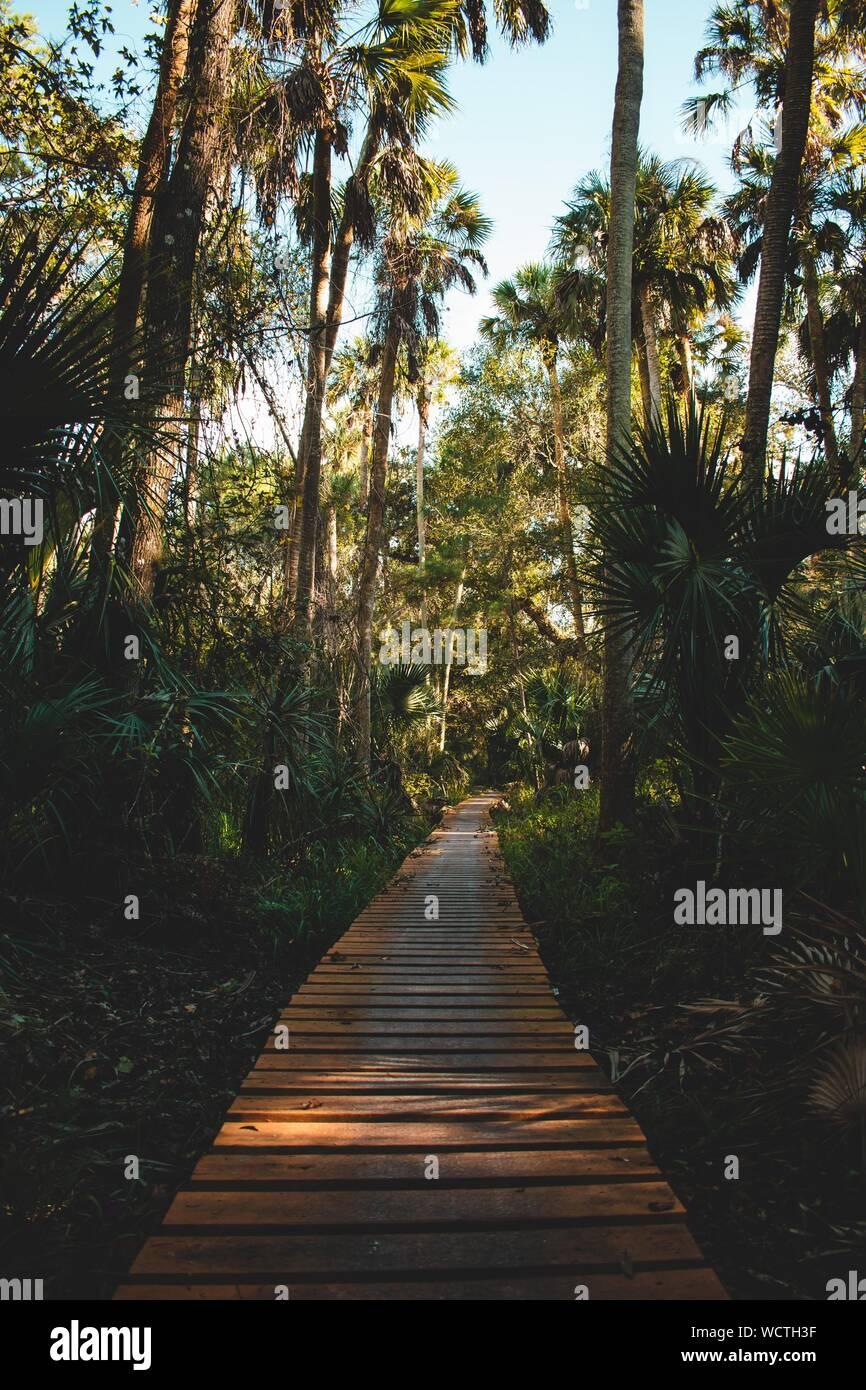 Vertikale Aufnahme eines Weges aus Holzbrettern umgeben Mit tropischen Pflanzen und Bäumen Stockfoto