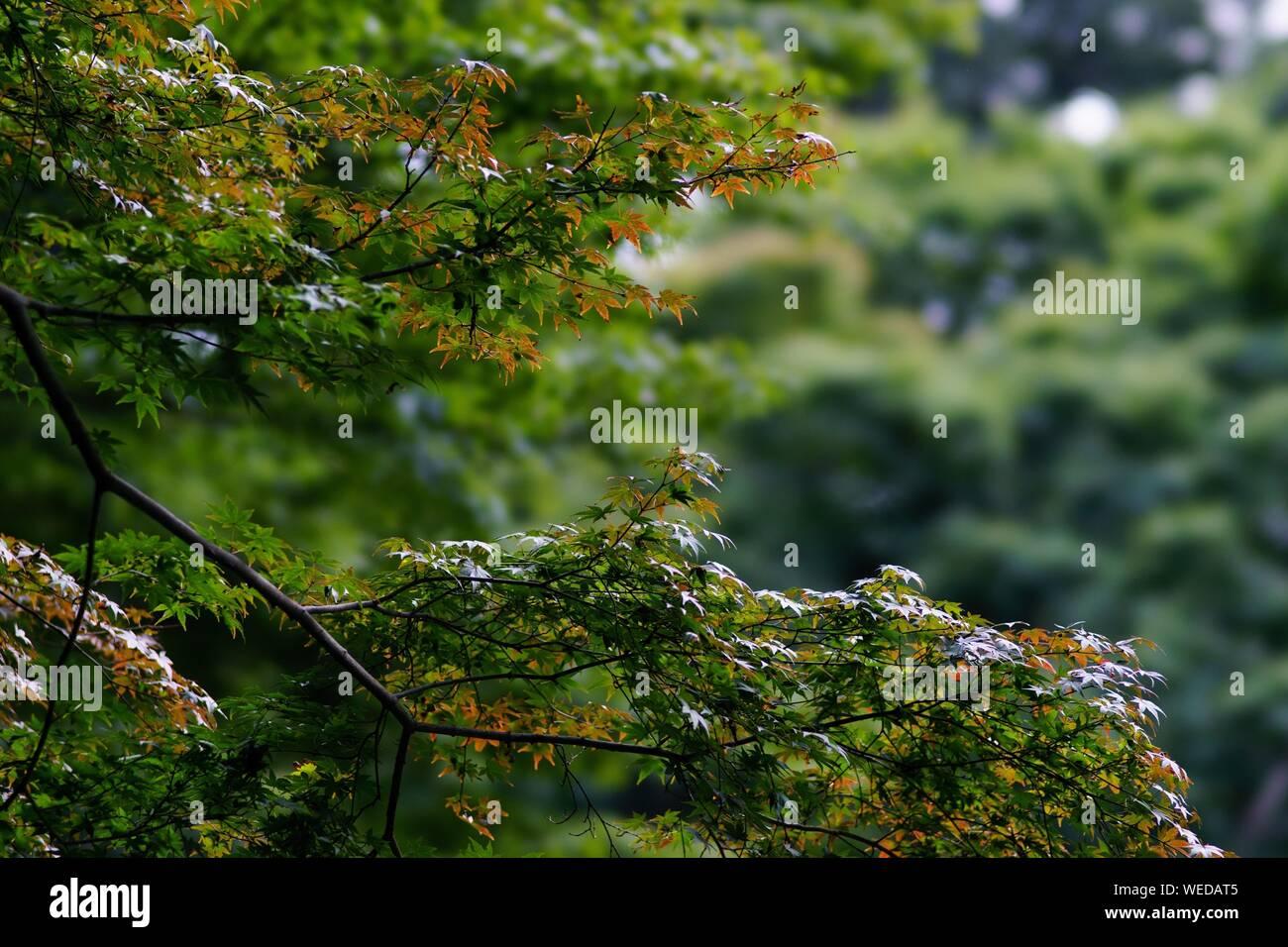 In der Nähe von Lizard am Baum im Herbst Stockfoto