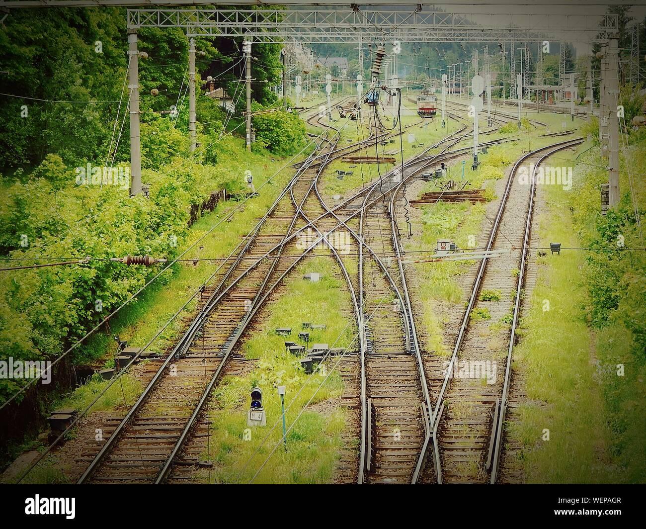 Eisenbahnschienen auf Feld durch Bäume Stockfoto