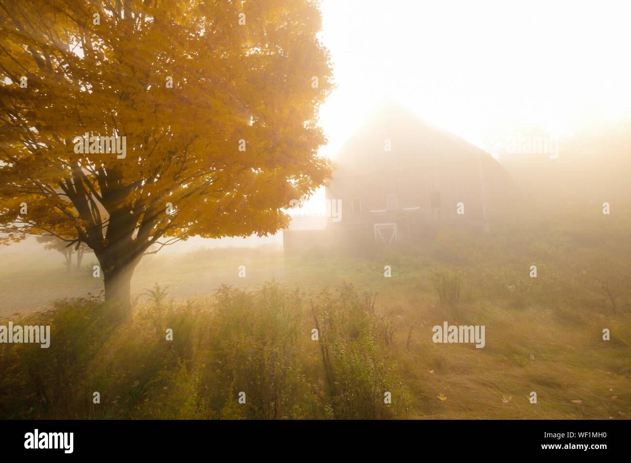 Sonnenlicht streifen durch die nebligen Bäume auf einem herbstmorgen mit einem alten roten Scheune im Hintergrund. Stockfoto