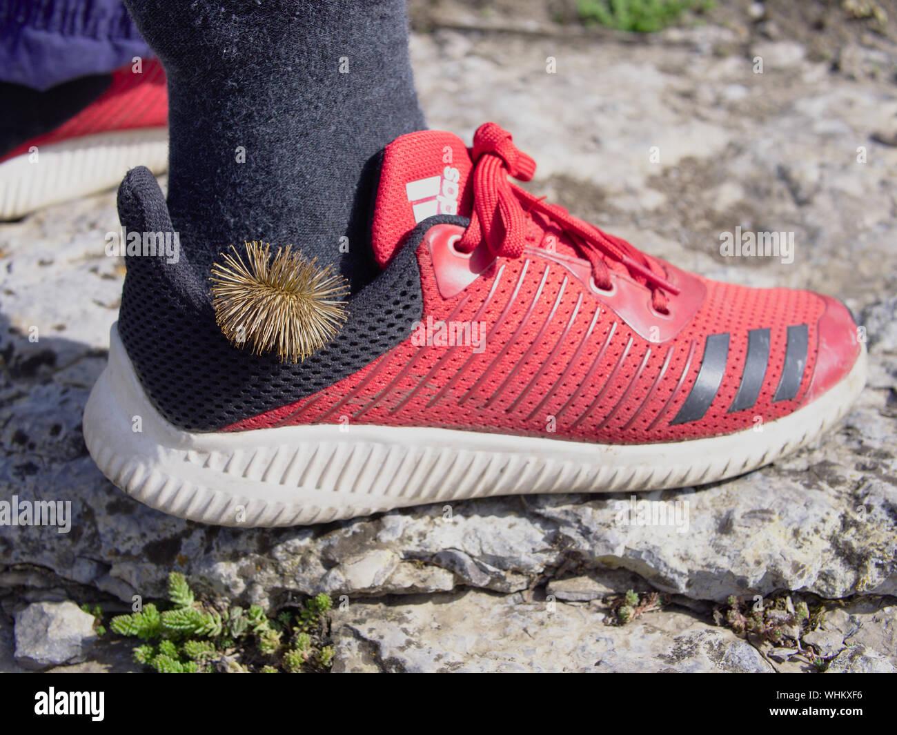 Rote Adidas Stockfotos & Rote Adidas Bilder Alamy