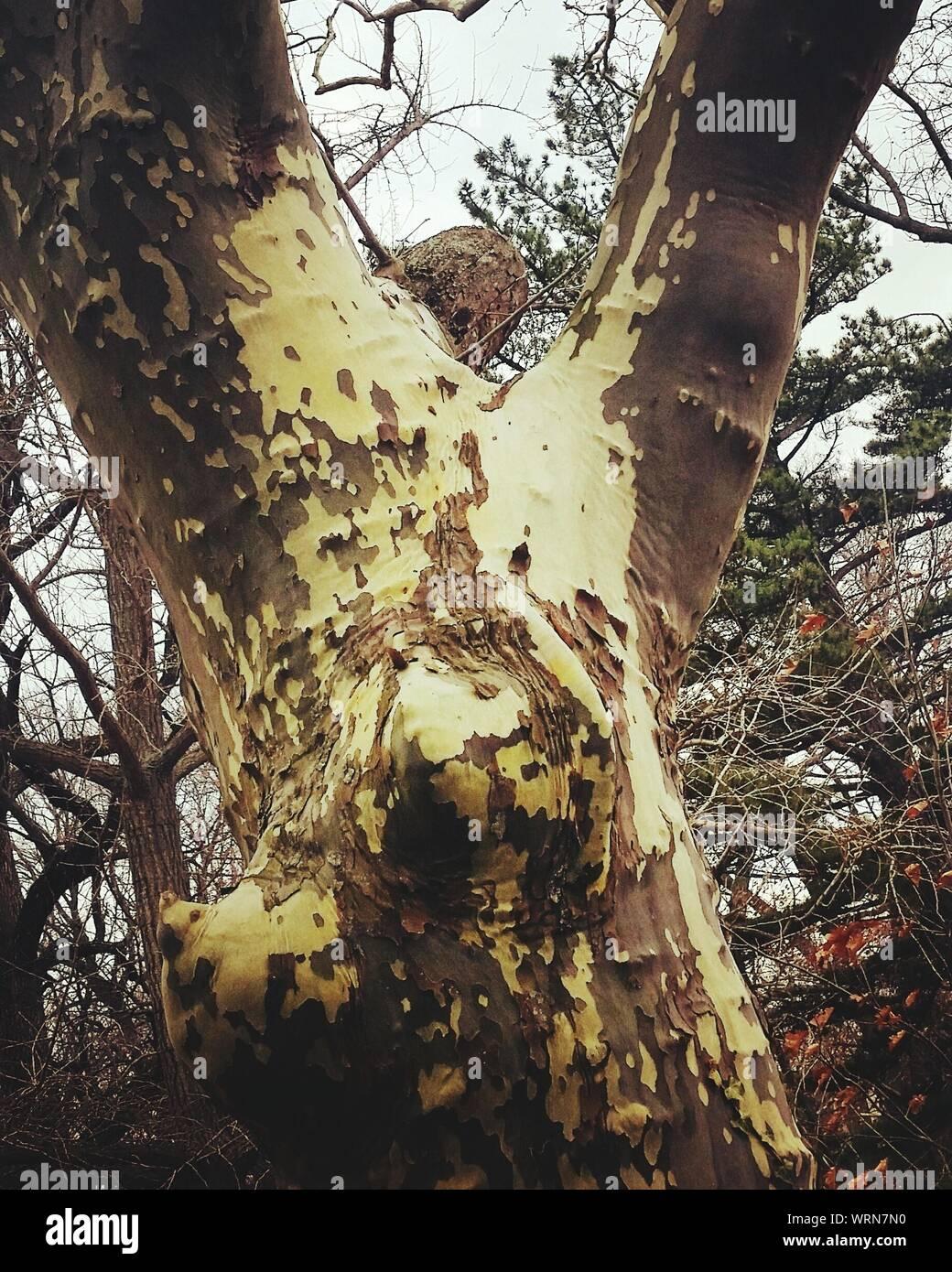 In der Nähe von Lizard auf Baum im Wald Stockfoto