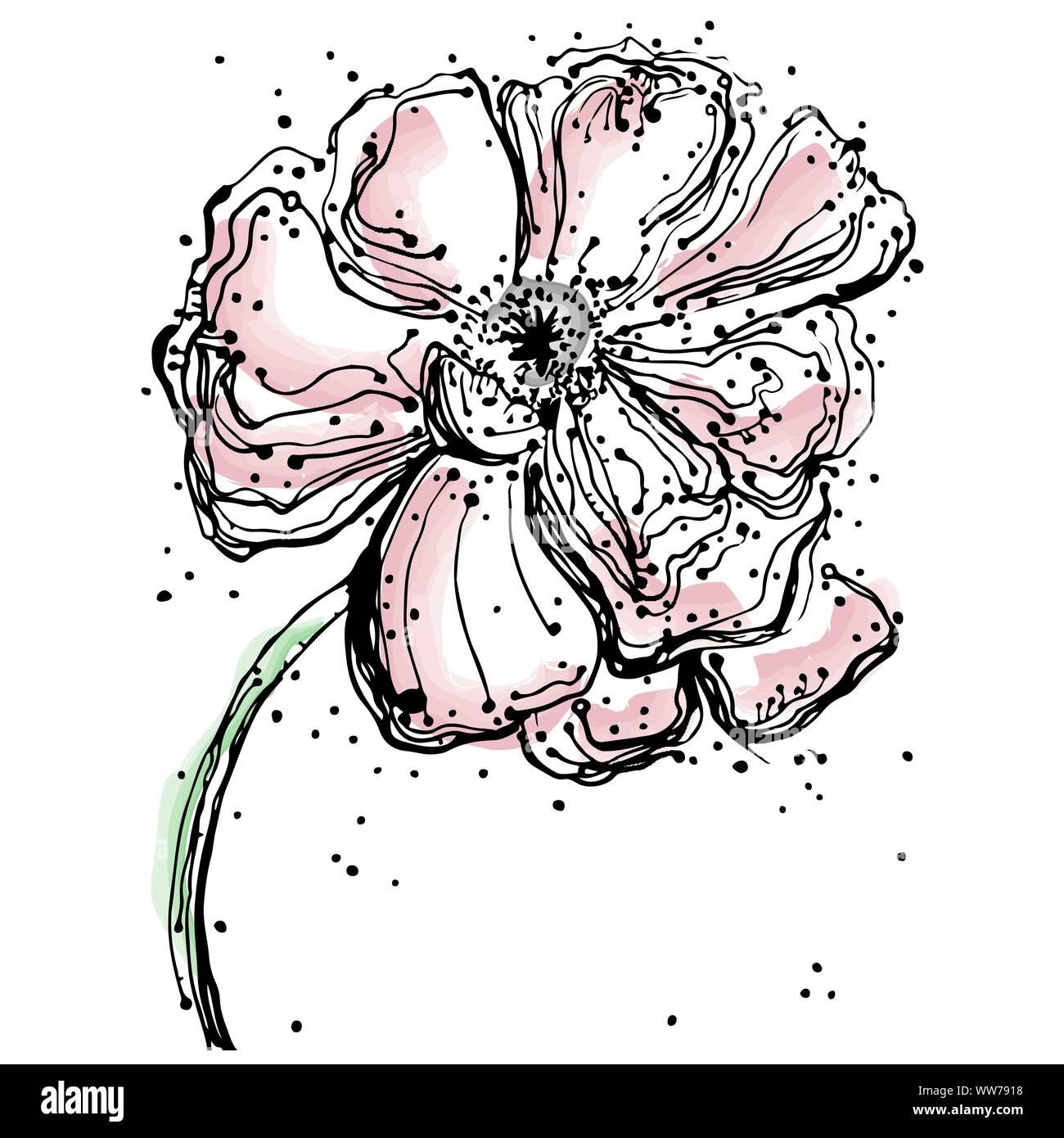 Abstrakte Blumen Mohn Isoliert Abbildung Gezeichnet Skizze Stock Vektorgrafik Alamy