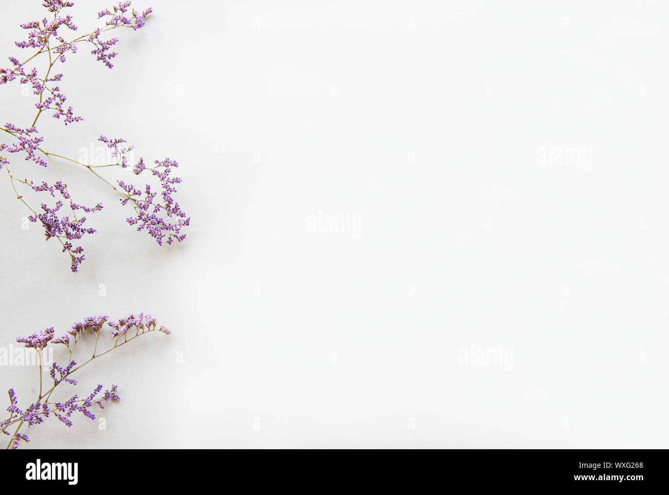 Blumen Komposition. Rahmen aus getrockneten Blumen auf weißem Hintergrund. Flach, Ansicht von oben Stockfoto