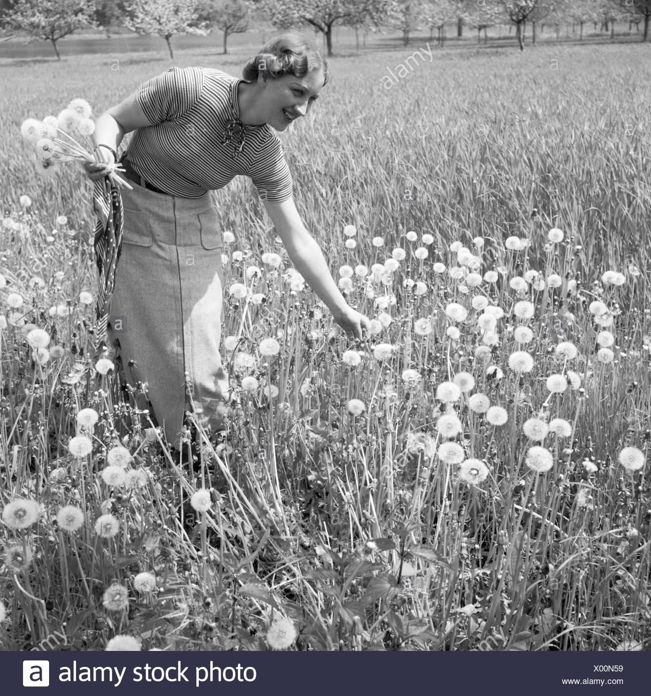 Eine Frau Pflückt Löwenzahn in Einem Feld, Deutschland 1930er Jahre. Eine Frau, die Kommissionierung einige Löwenzähne in einem Feld, Deutschland der 1930er Jahre. Stockbild