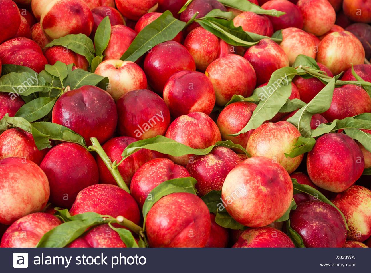 Obst Hintergrund, Nektarinen und Pfirsiche fruchtig Stockbild