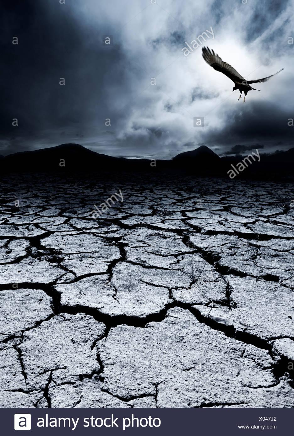 Ein Vogel fliegt über eine öde Landschaft Stockbild