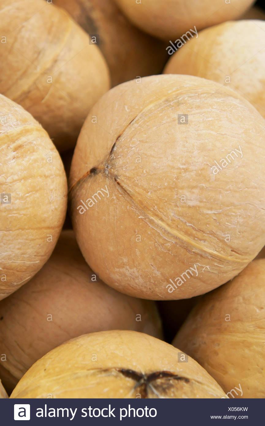 Dunkelhäutigen Kokosnuss Stockbild