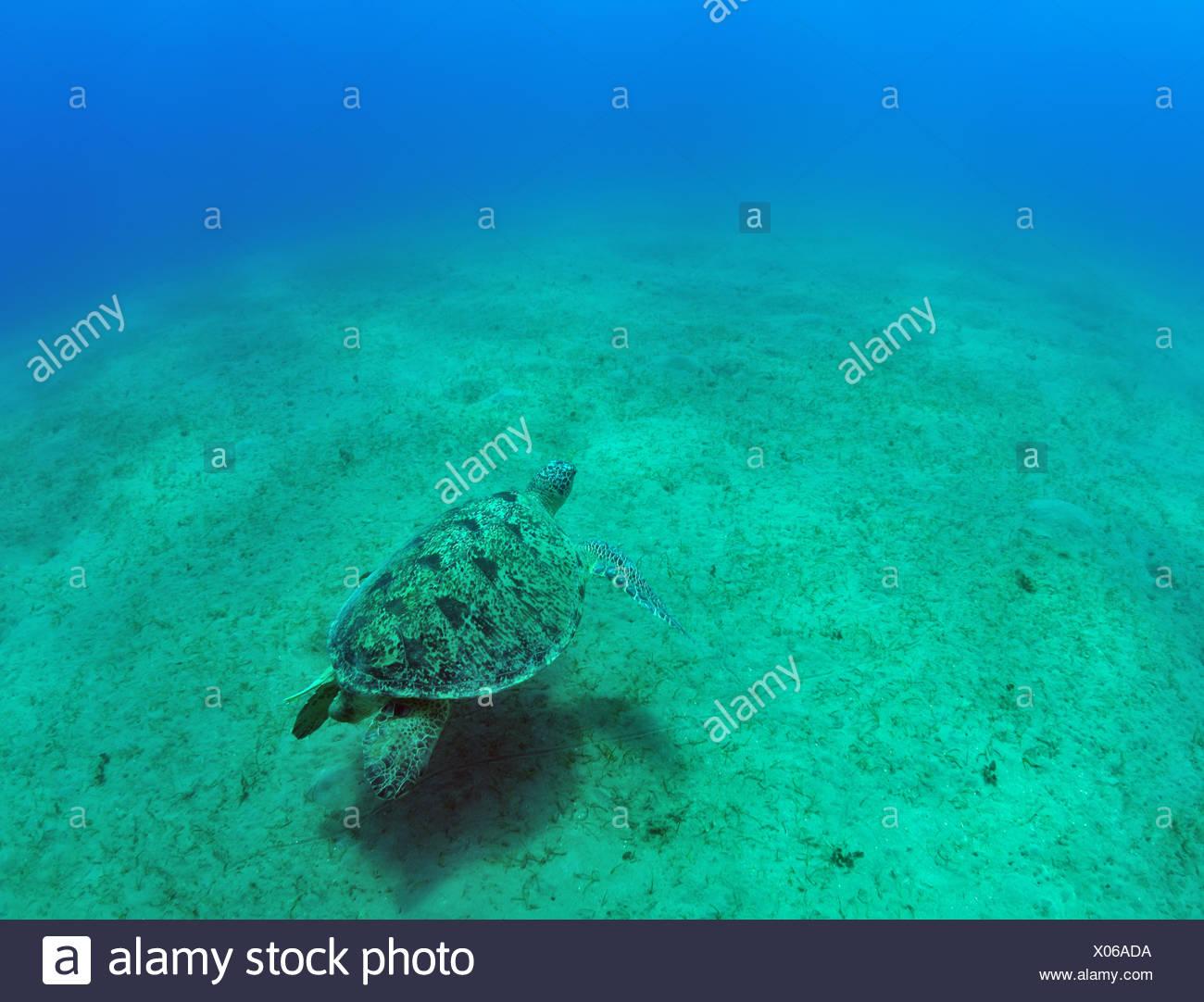 Ausgezeichnet Malvorlagen Von Meeresschildkröten Ideen - Druckbare ...