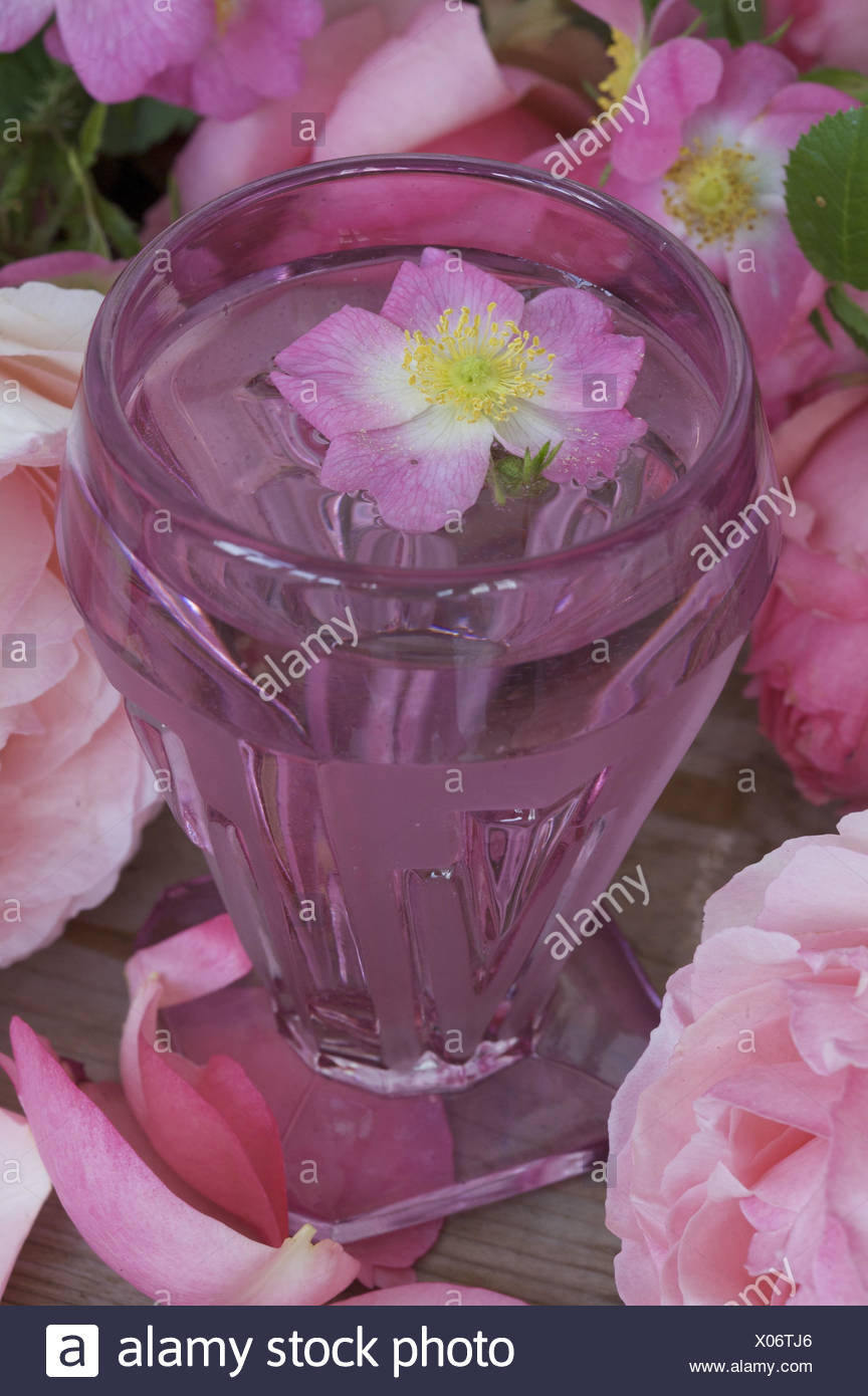 Rosenwasser Glas Tischdekoration Rosen Stockfoto Bild 275516926