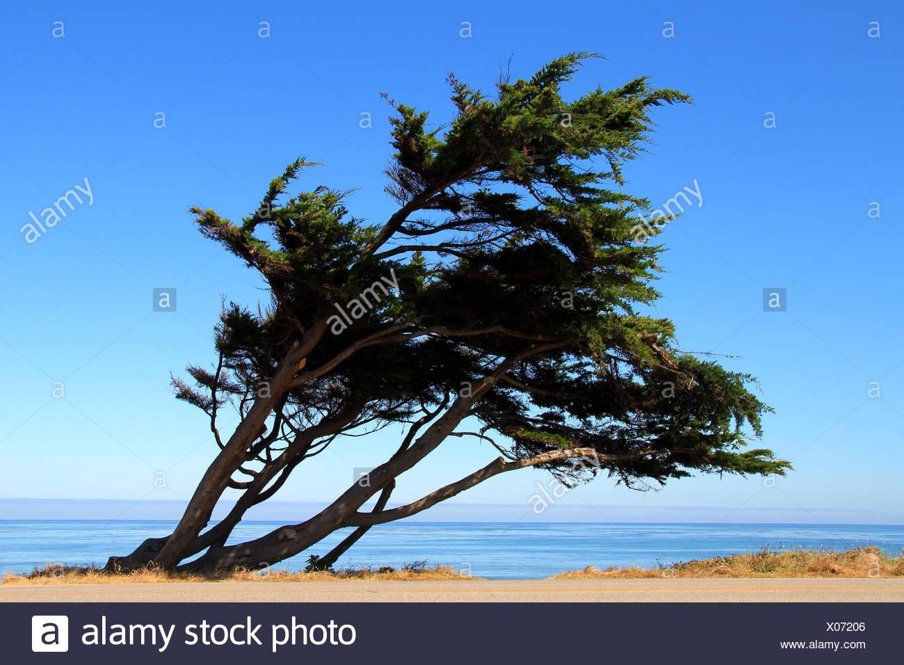 Windigen Baum Stockbild