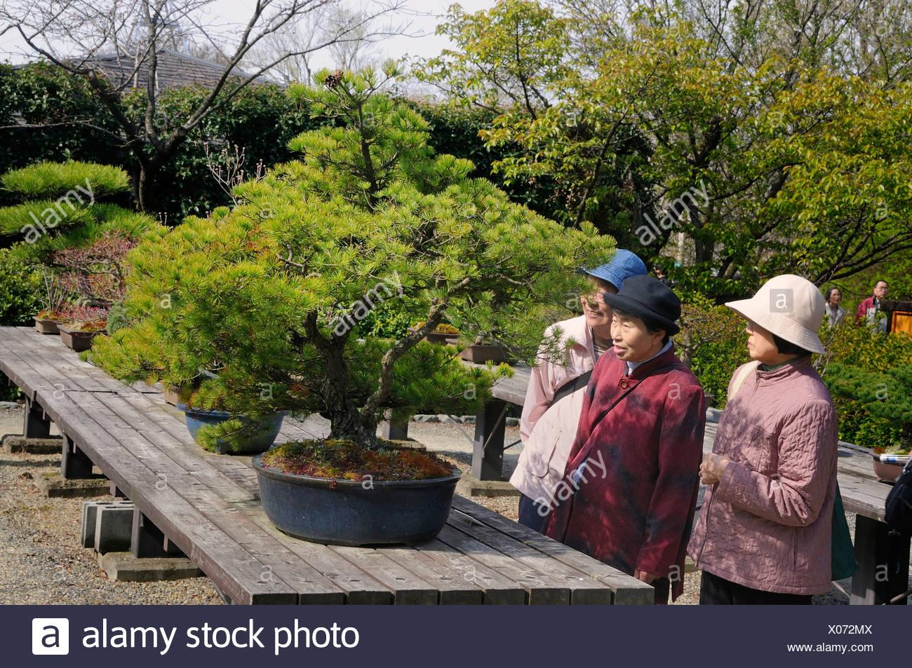 Alte Japanische Frauen Inspektion Einen Bonsai Baum Im Botanischen