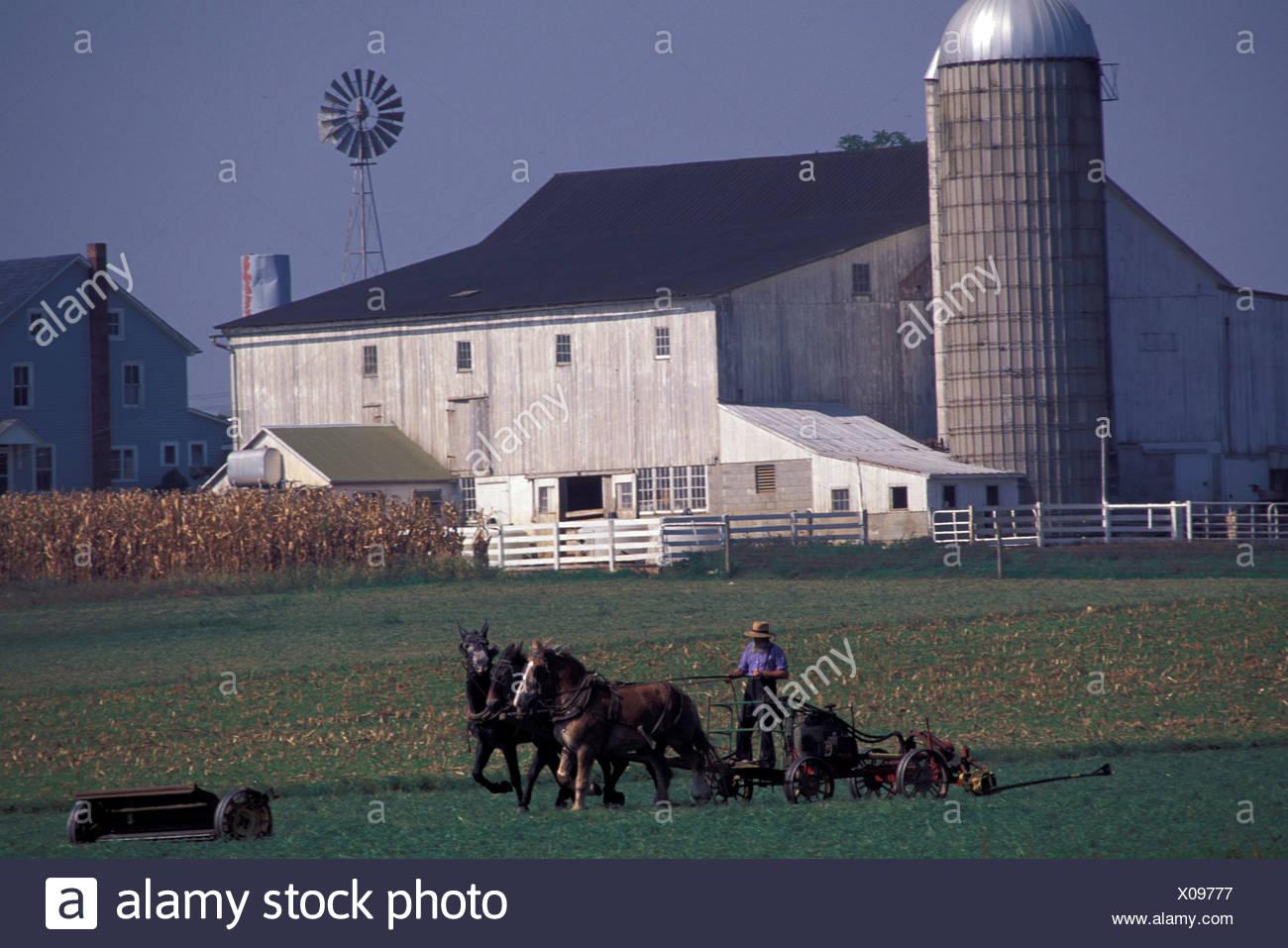 alten altmodischen amische Landwirte Käfige Pferde Feld Bauernhof Landwirtschaft Religion Christentum Lancaster County Phil Stockbild