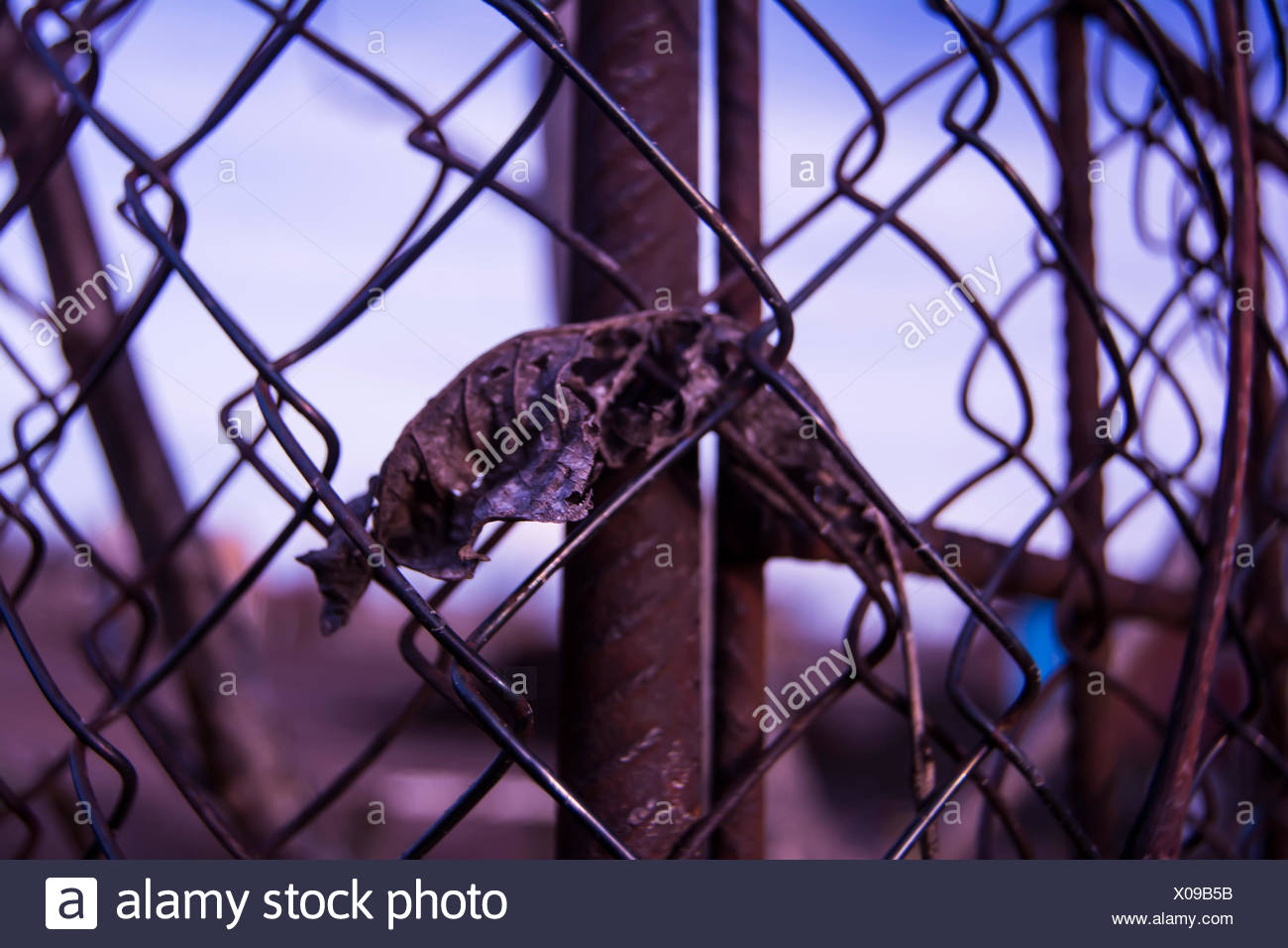 Stuck In The Fence Stockfotos & Stuck In The Fence Bilder - Alamy