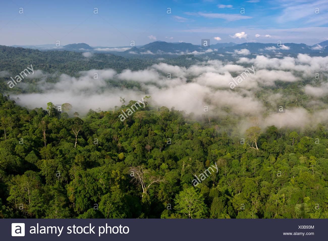 Niedrige Wolken hängen über Dipterocarp Tieflandregenwald. Danum Valley, Sabah, Borneo. Stockbild