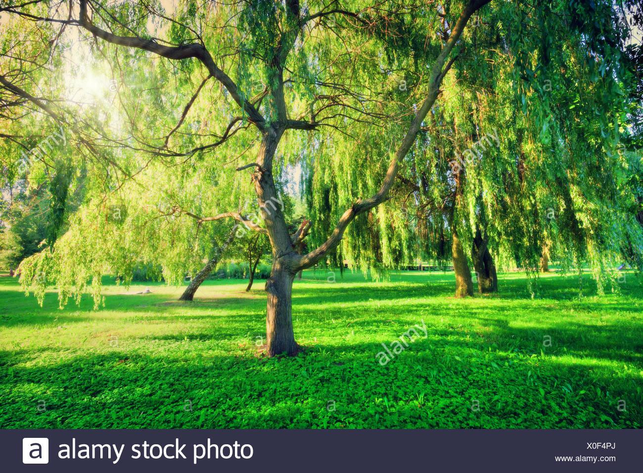 Green Theme Stockfotos & Green Theme Bilder - Alamy