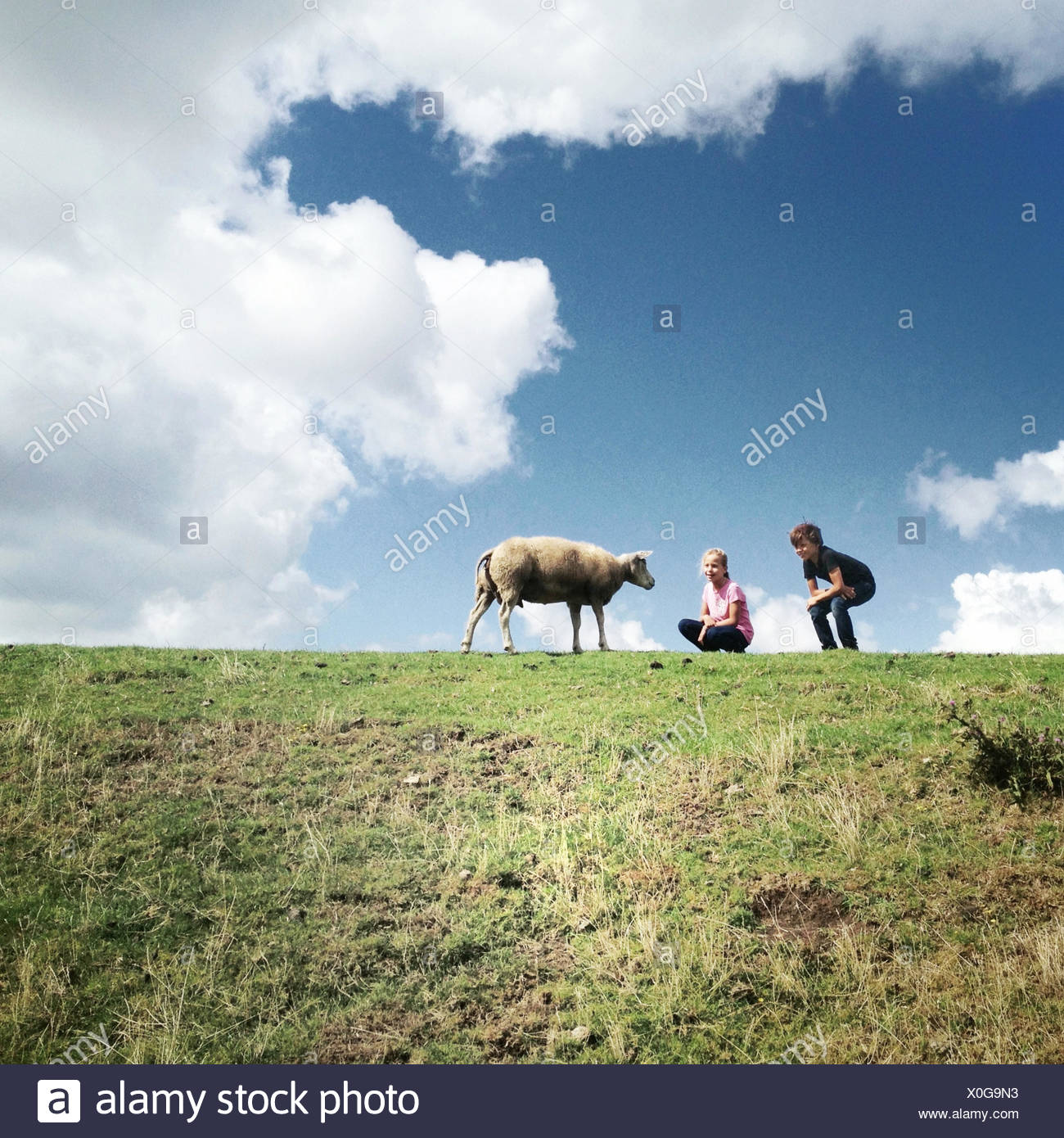 Zwei Kinder mit einem Schaf auf einem Feld Stockfoto