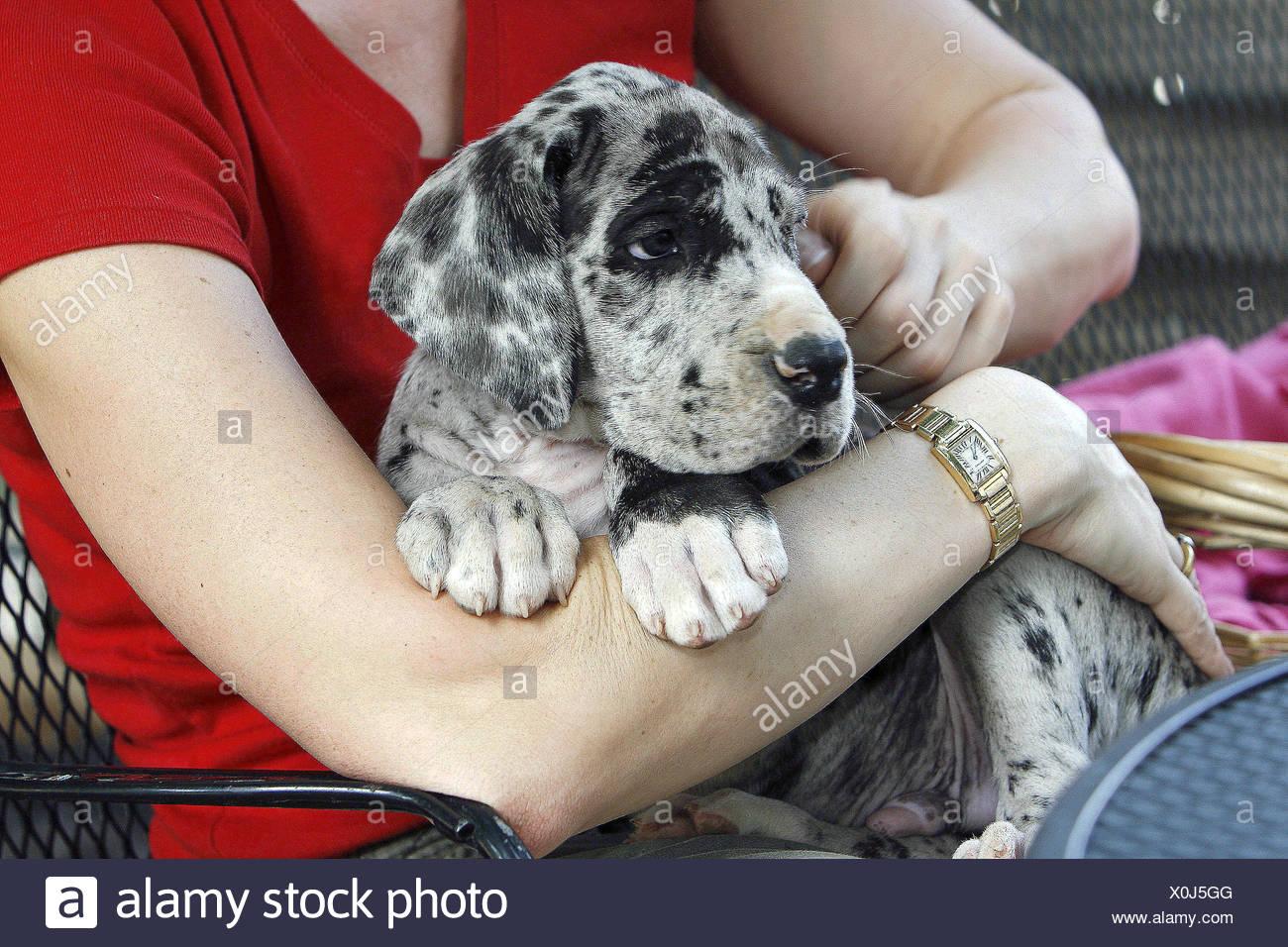 Frau intim mit hund