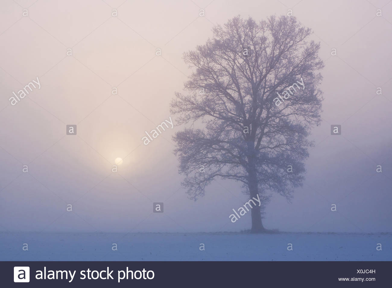 Winterimpression in Horst Stockbild