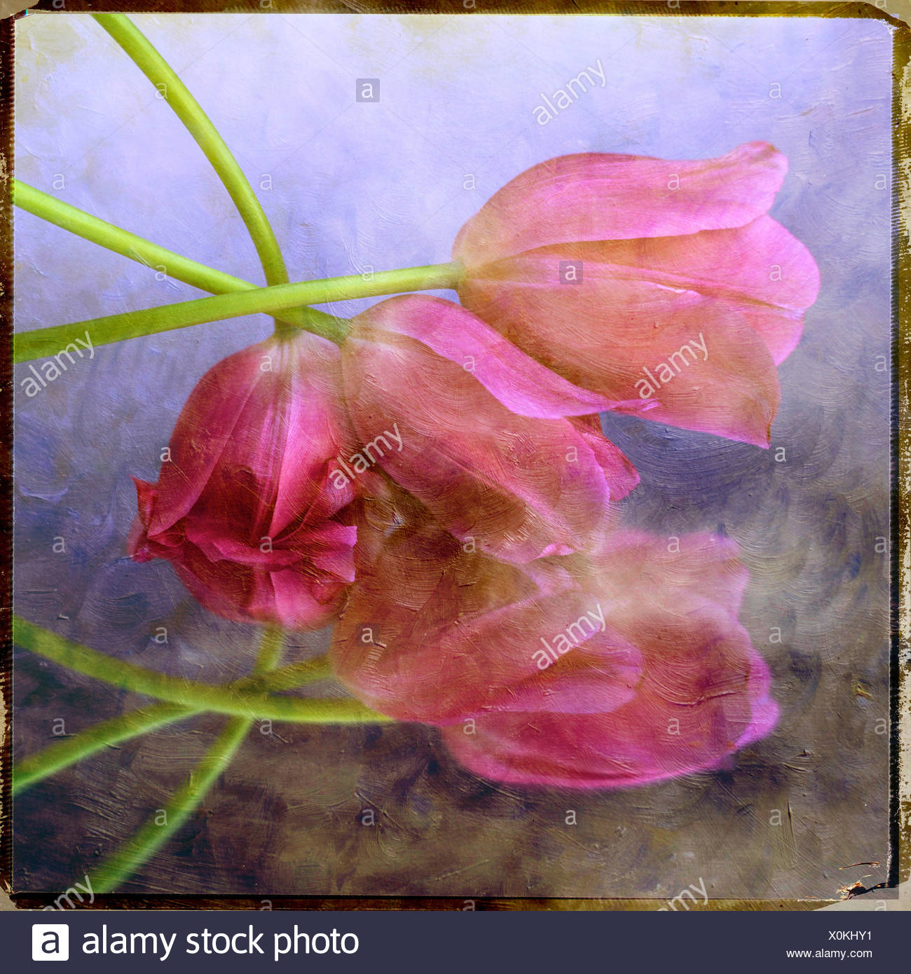 Rosa Tulpen in der montage Stockbild