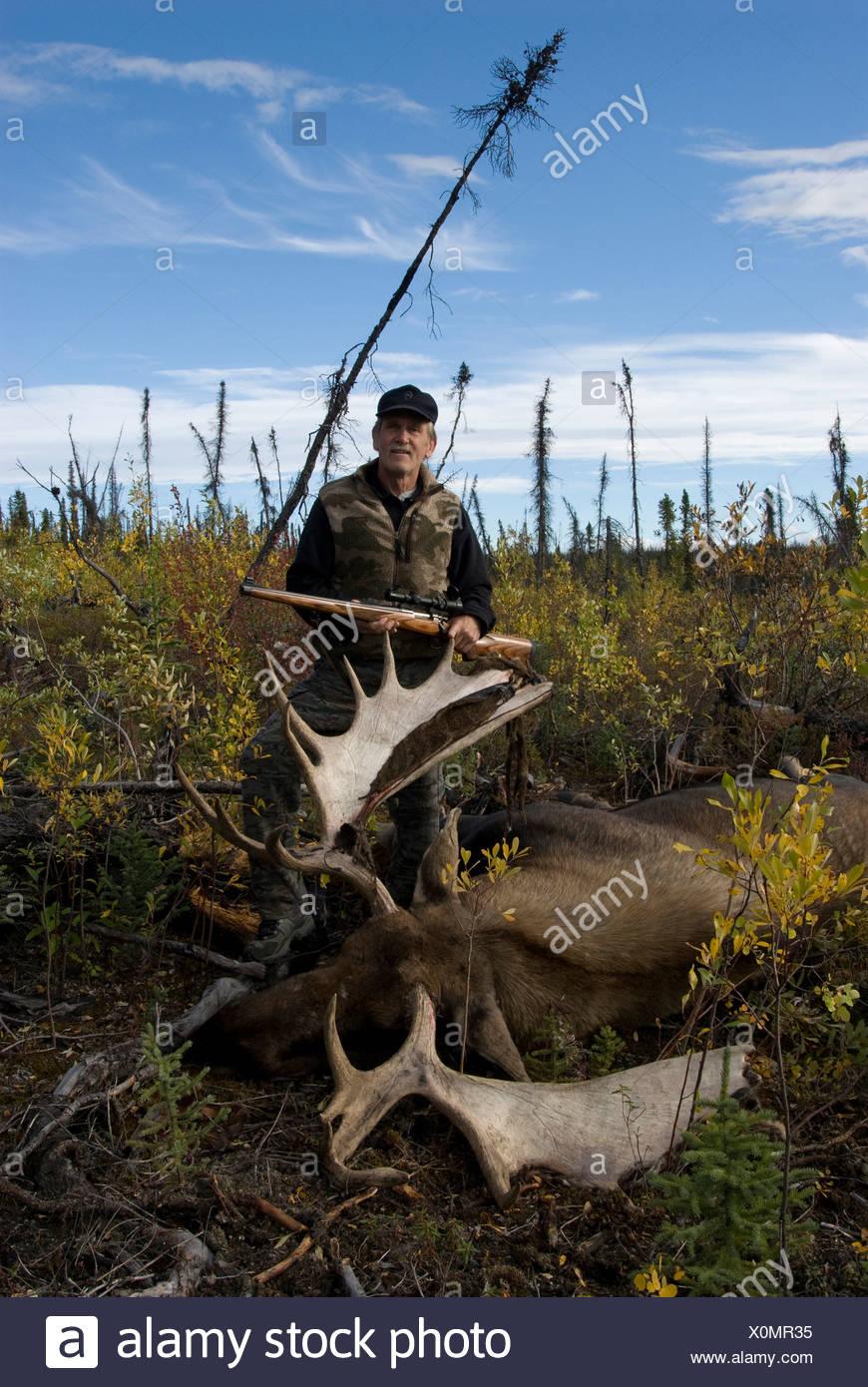 Hunter stehend nahe bei kürzlich getöteten Elchbullen. Yukon Territorium, Kanada. -Modell veröffentlicht. Stockbild