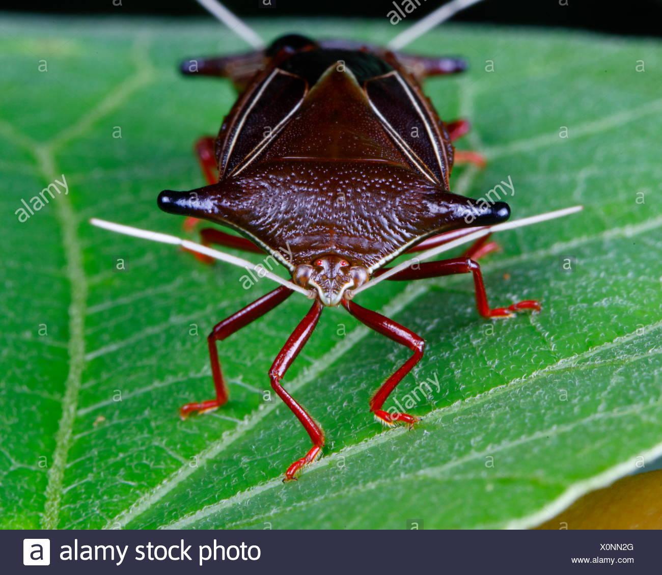 Großartig Bug Färbung Blatt Ideen - Malvorlagen Von Tieren - ngadi.info