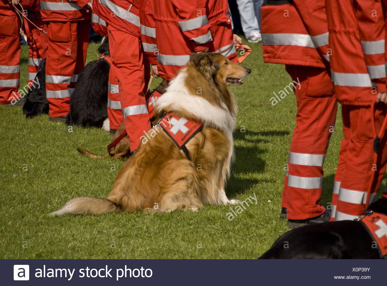 Rettungs-Hunde-Geschwader Stockbild