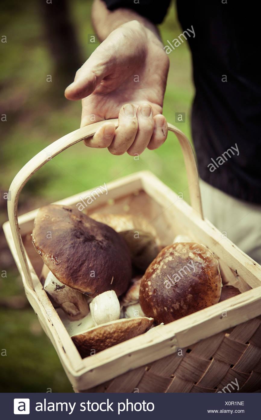 Mittelteil der Mann, der Korb mit Pilzen Stockbild