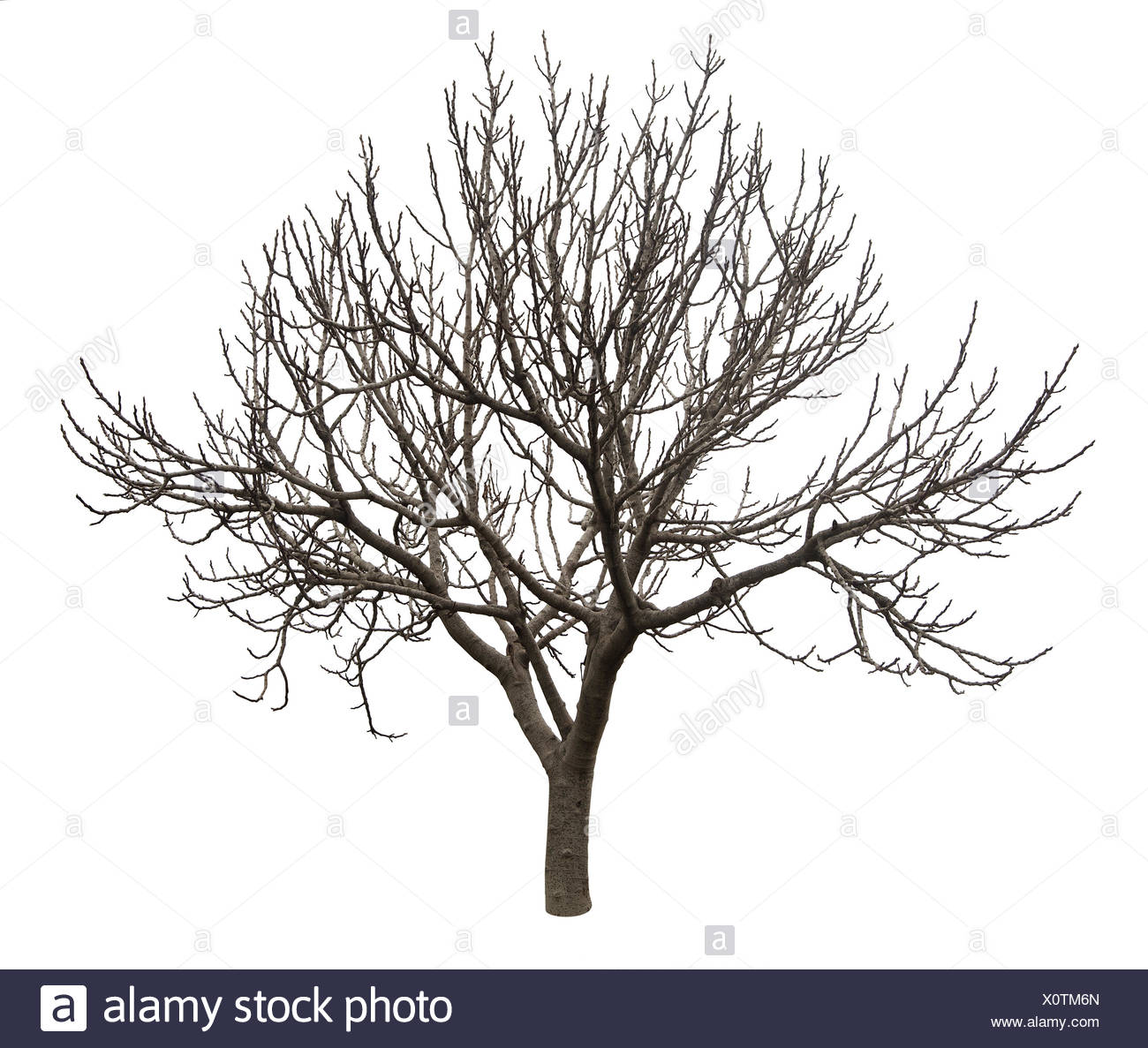 Fantastisch Kahler Baum Umriss Färbung Seite Bilder - Malvorlagen ...