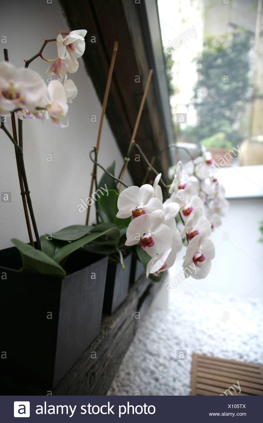 Orchideen in Vasen, Dekoration, Haus, Wohnzimmer, Lifestyle ...