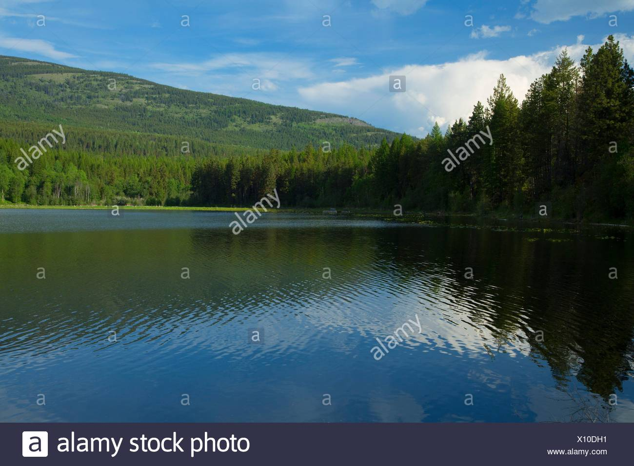 Bürste See, kaniksu National Forest, Idaho. Stockbild